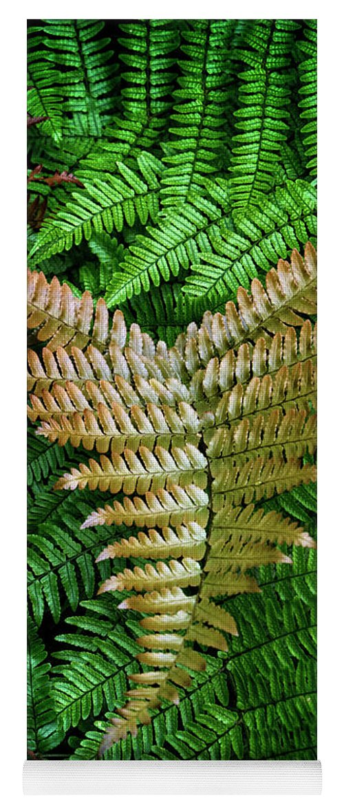 Fern Yoga Mat featuring the photograph Fern by Chrystal Mimbs