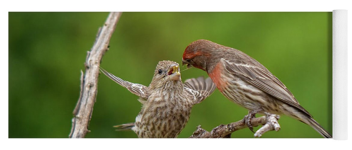 Linda Brody Yoga Mat featuring the photograph Finch Feeding Time I by Linda Brody