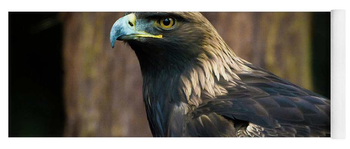 Eagle Yoga Mat featuring the photograph Golden Eagle 5 by Jason Brooks