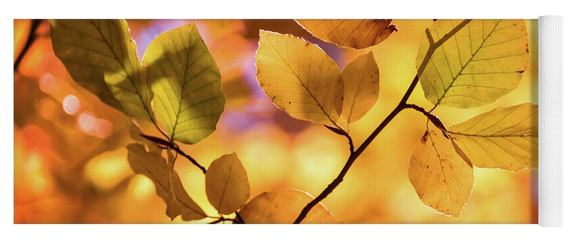 Autumn Yoga Mat featuring the photograph Golden Foliage by Delphimages Photo Creations