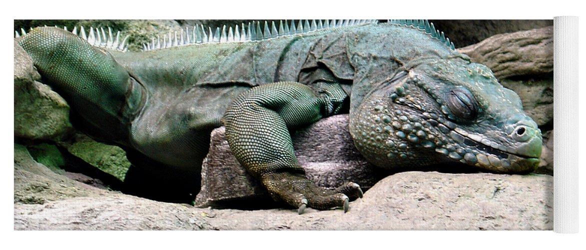 Lizard Yoga Mat featuring the photograph Grand Cayman Blue Iguana by Angelina Tamez