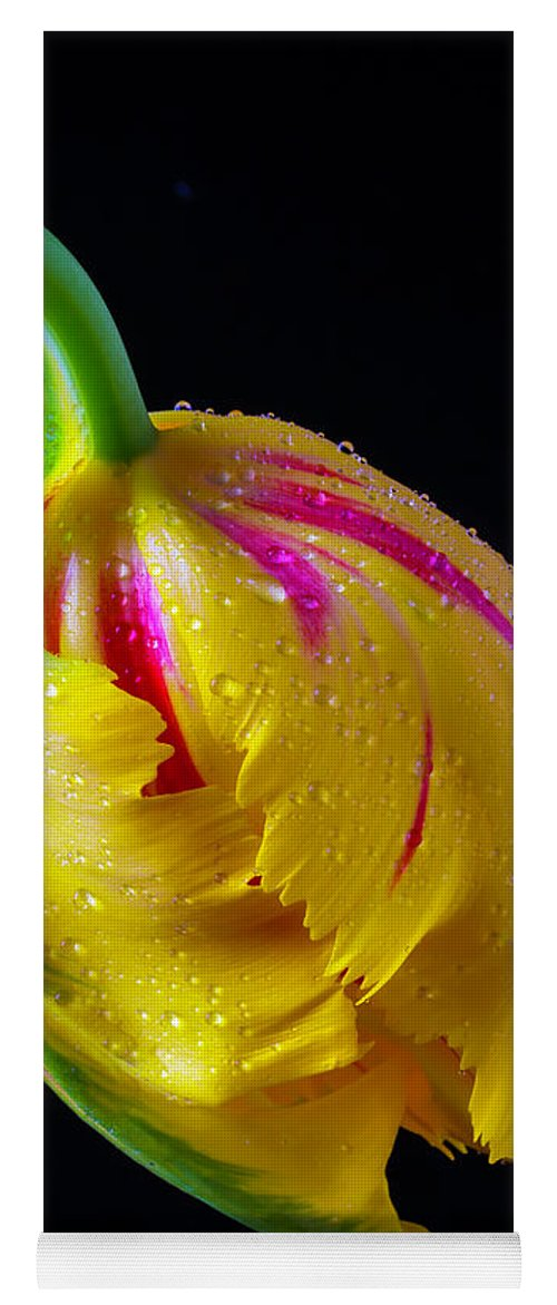 Green Yoga Mat featuring the photograph Graphic Yellow French Tulip by Garry Gay