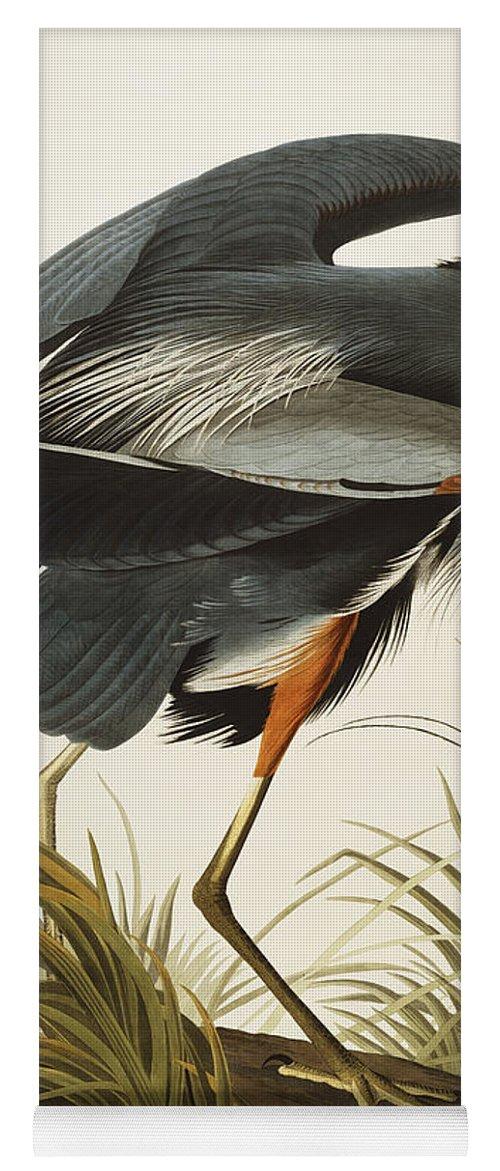 Great Blue Heron Yoga Mat featuring the drawing Great Blue Heron by John James Audubon