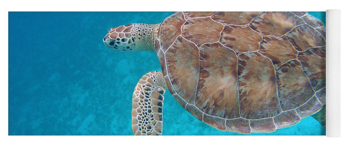 Green Sea Turtle Yoga Mat featuring the photograph Green In Blue by Kimberly Mohlenhoff