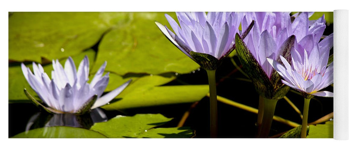 Purple Yoga Mat featuring the photograph Group Of Lavender Lillies by Teresa Mucha
