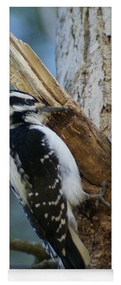 Birds Yoga Mat featuring the photograph Hairy Woodpecker by Ben Upham III