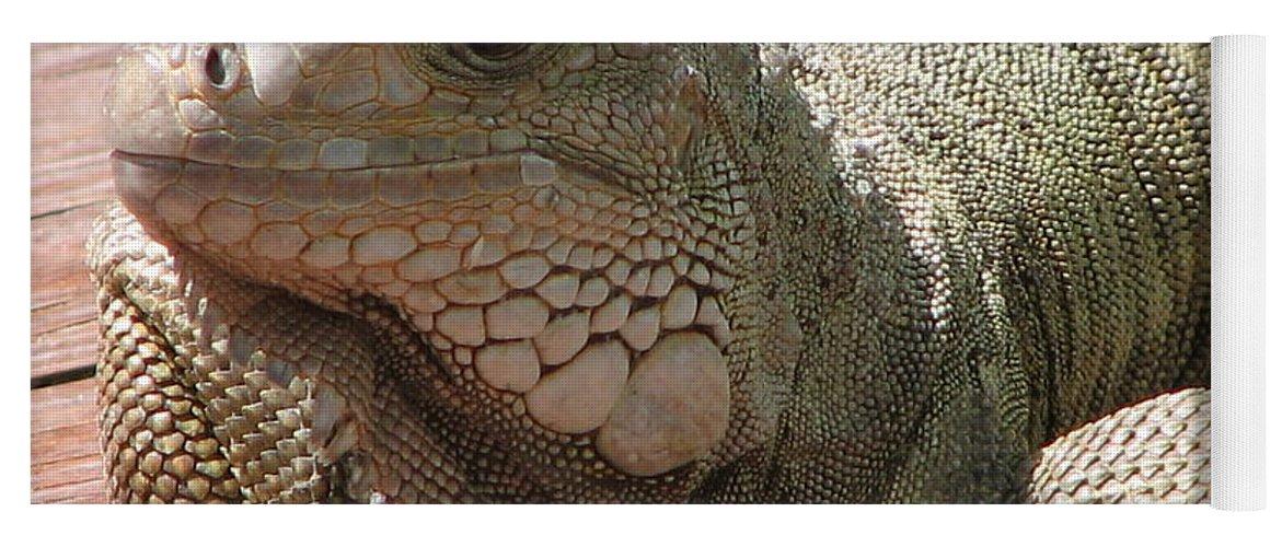 Iguana Yoga Mat featuring the photograph Here Leezard Leezard by Stacey May