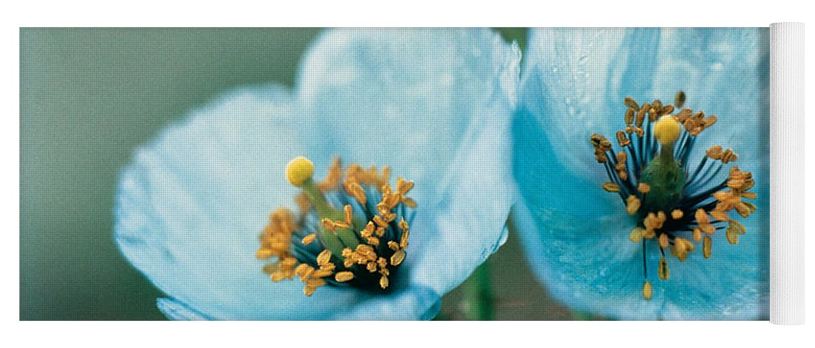 Flower Yoga Mat featuring the photograph Himalayan Blue Poppy by American School