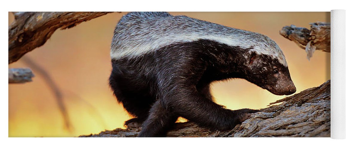Honey Badger Yoga Mat featuring the photograph Honey Badger by Johan Swanepoel