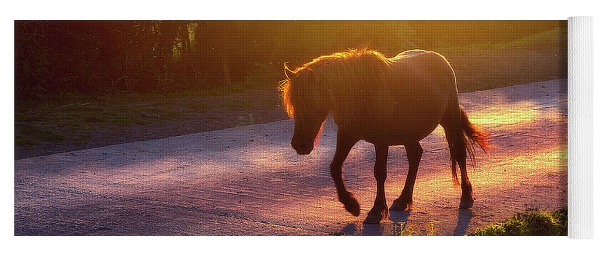 Horse Yoga Mat featuring the photograph Horse Crossing The Road At Sunset by Mikel Martinez de Osaba