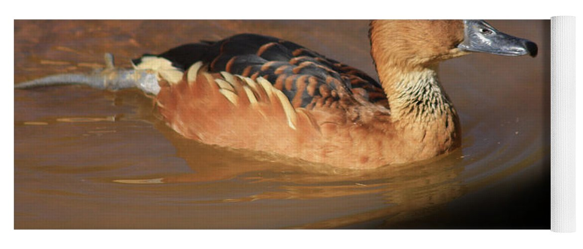 Ducks Yoga Mat featuring the photograph Into The Darkness by Kim Henderson