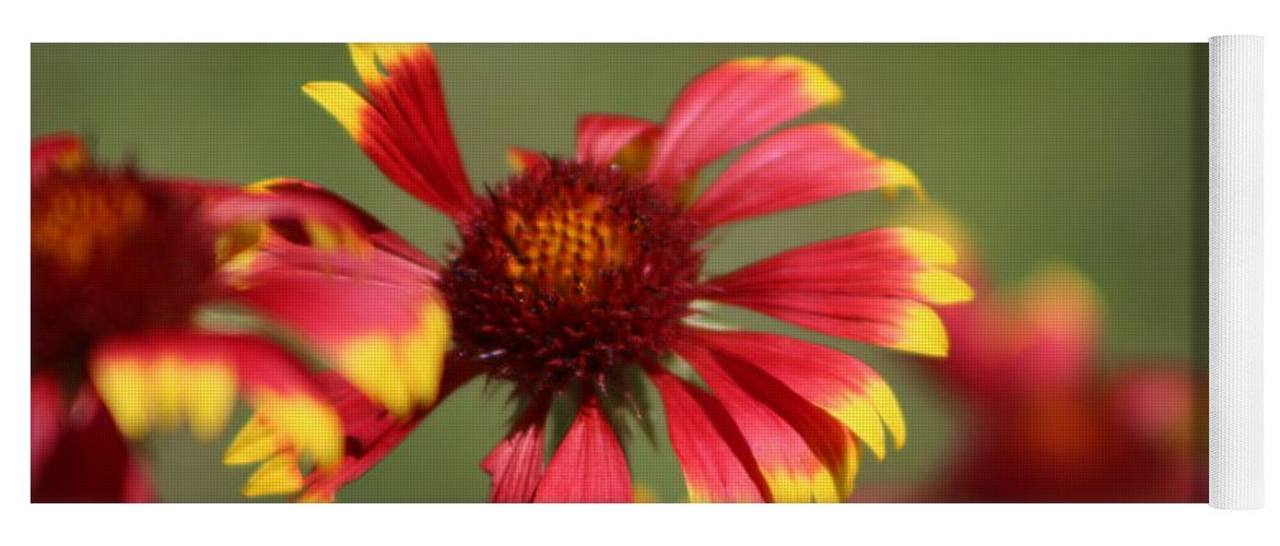 Coneflower Yoga Mat featuring the photograph Lemon Yellow and Candy Apple Red Coneflower by Colleen Cornelius