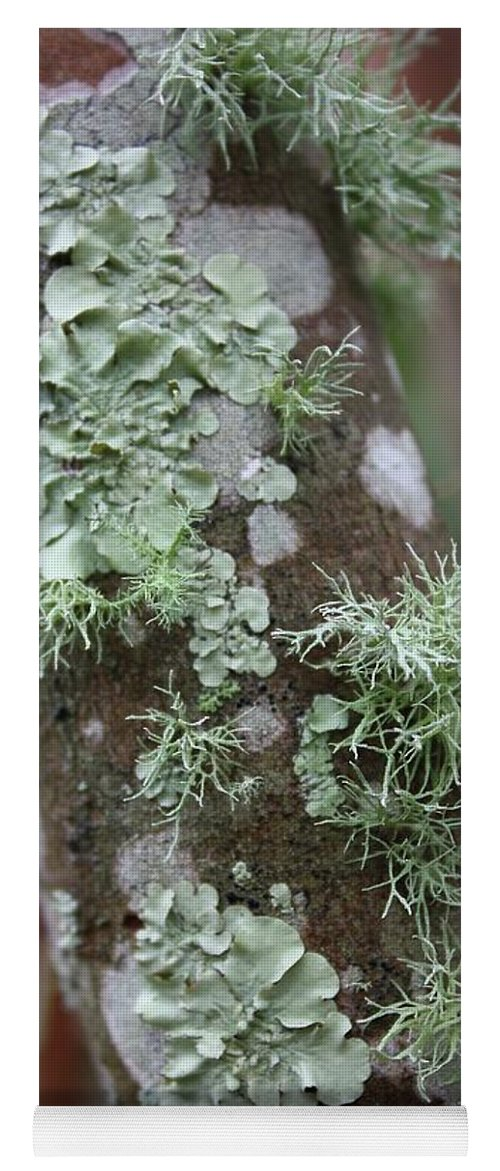 Nature Yoga Mat featuring the photograph Lichens 4 by Carol Groenen