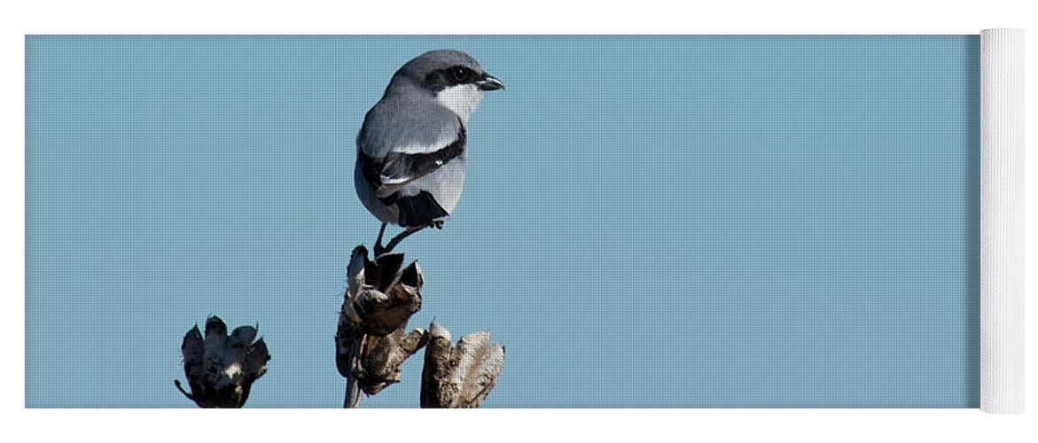 Loggerhead Shrike Yoga Mat featuring the photograph Loggerhead Shrike by Frank Madia