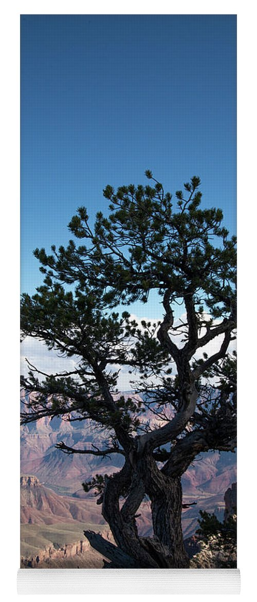 Grand Canyon National Park Yoga Mat featuring the photograph Lone Tree 2 by Frank Madia