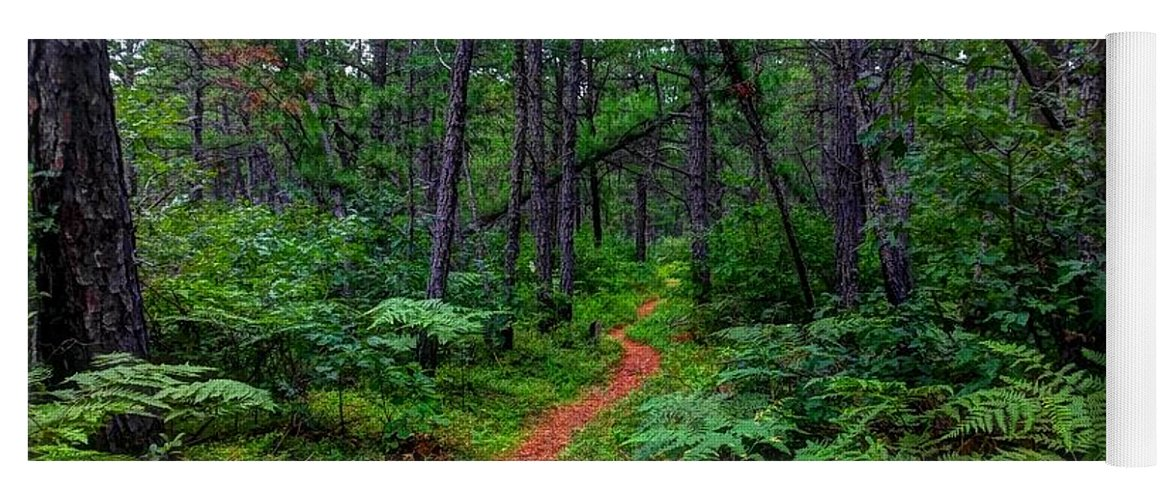 Pines Yoga Mat featuring the photograph Magical Pine Path by Holly Cyr