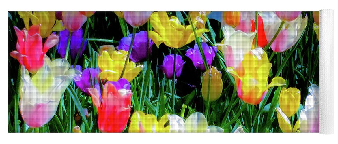 Tulips Yoga Mat featuring the photograph Mixed Tulips In Bloom by D Davila