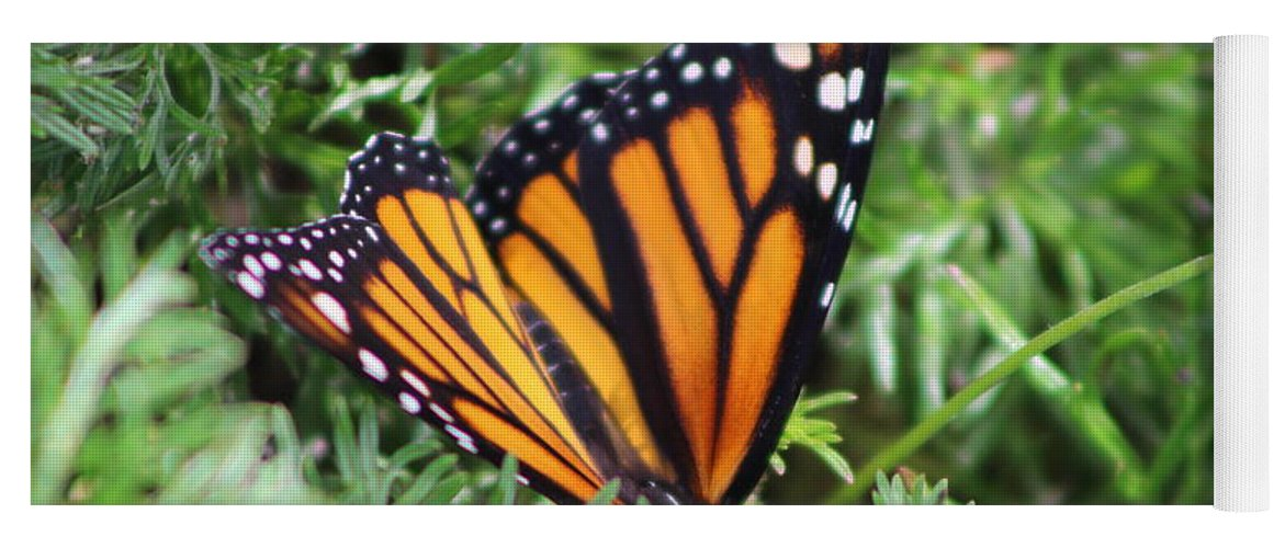 Monarch Butterfly Yoga Mat featuring the photograph Monarch Butterfly In Lush Leaves by Colleen Cornelius