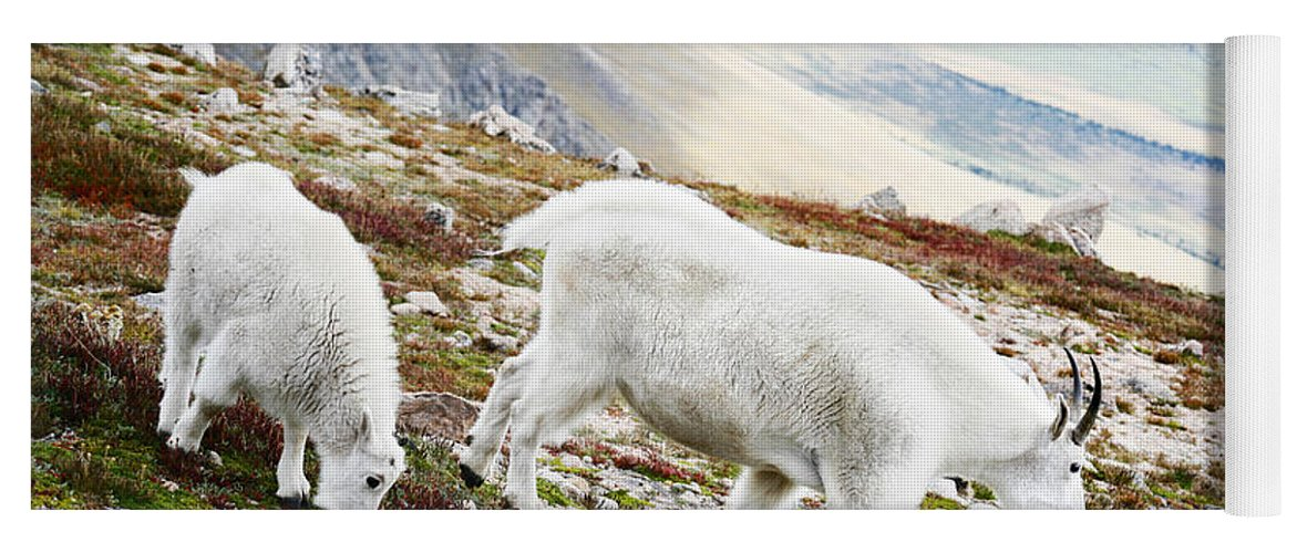Mountain Yoga Mat featuring the photograph Mountain Goats 1 by Marilyn Hunt