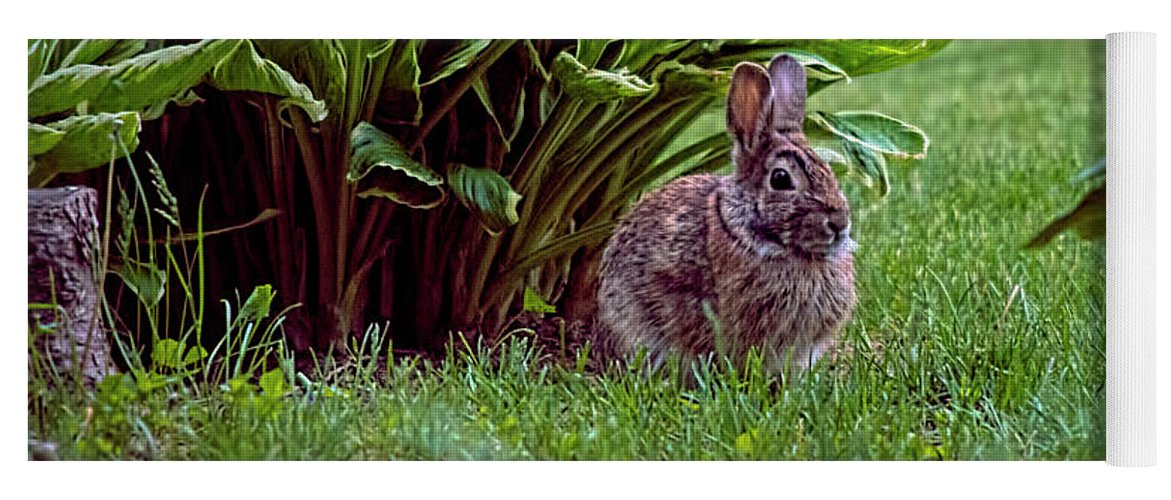 Bunny Yoga Mat featuring the photograph My Peter Rabbit by ChelleAnne Paradis