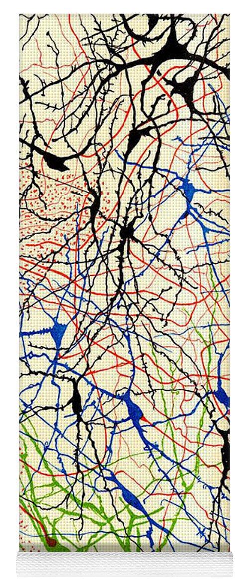 History Yoga Mat featuring the photograph Nerve Cells Santiago Ramon Y Cajal by Science Source