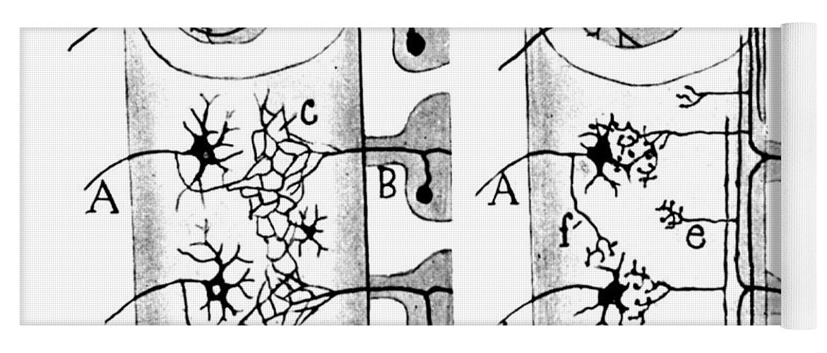 Science Yoga Mat featuring the photograph Neuroglia Cells Illustrated By Cajal by Science Source