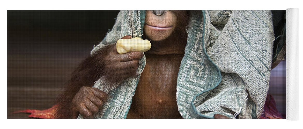 00486841 Yoga Mat featuring the photograph Orangutan 2yr Old Infant Holding Banana by Suzi Eszterhas