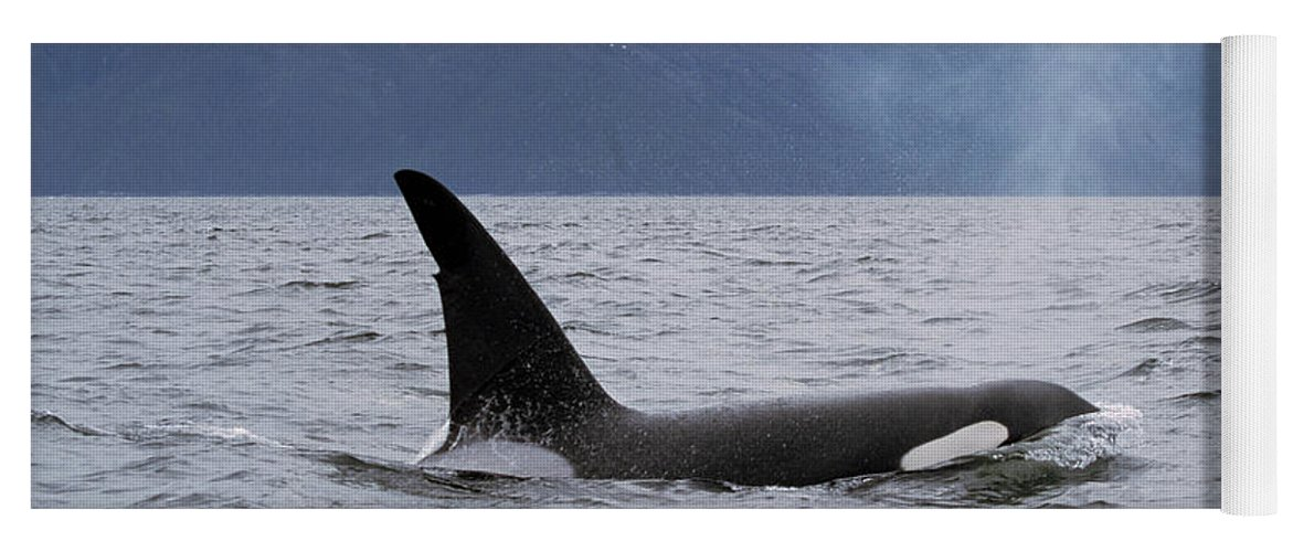 00196735 Yoga Mat featuring the photograph Orca in Inside Passage by Konrad Wothe