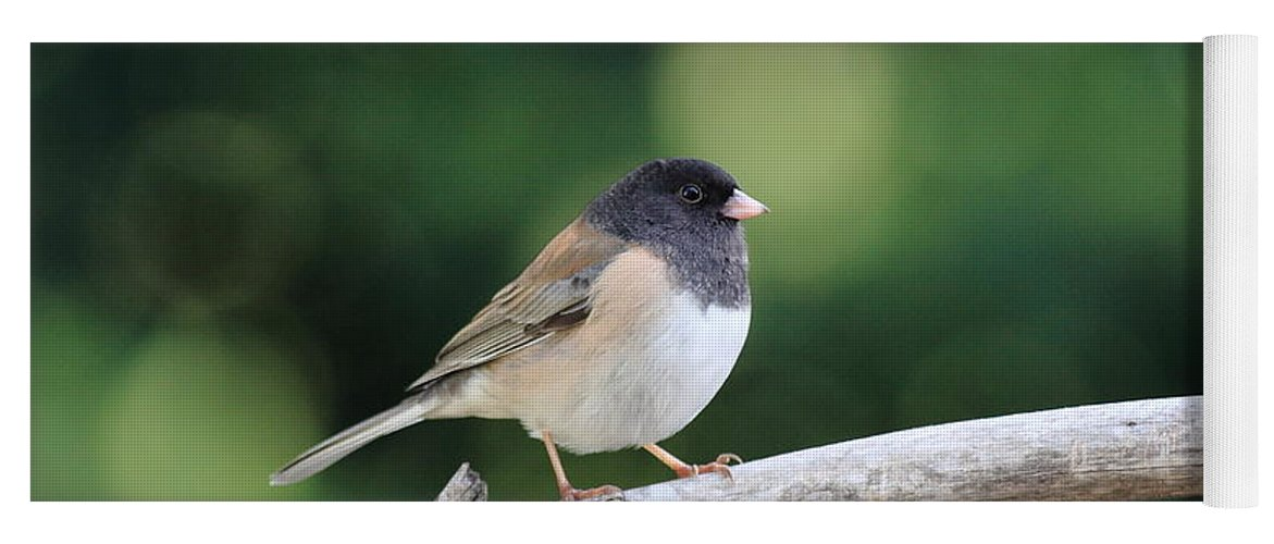 Wildlife Yoga Mat featuring the photograph Oregon Junco by Wingsdomain Art and Photography