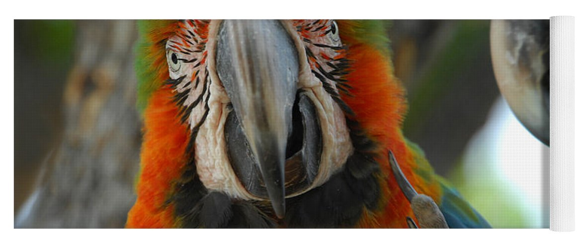 Parrot Yoga Mat featuring the photograph Parroting Information by Donna Blackhall