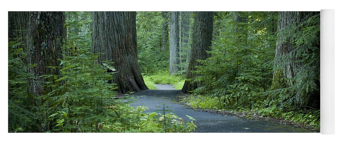 Grove Yoga Mat featuring the photograph Path Through The Cedars by Idaho Scenic Images Linda Lantzy