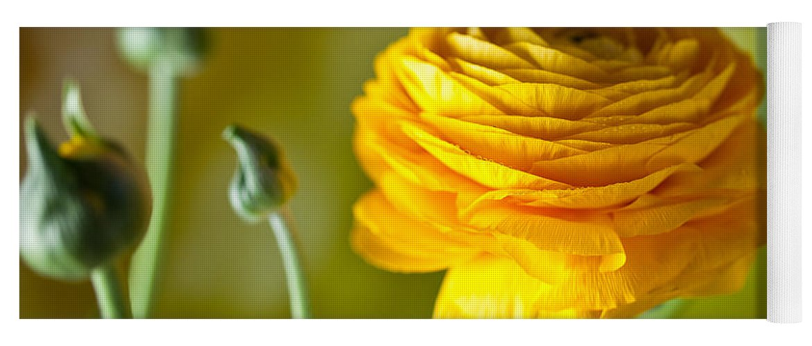 Yellow Yoga Mat featuring the photograph Persian Buttercup Flower by Nailia Schwarz