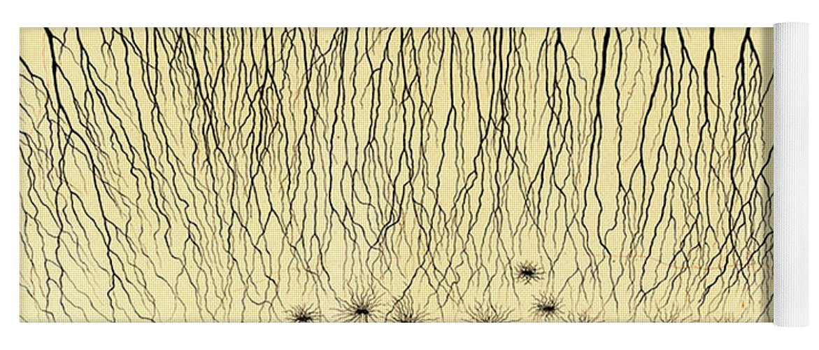History Yoga Mat featuring the photograph Pes Hipocampi Major Santiago Ramon Y Cajal by Science Source