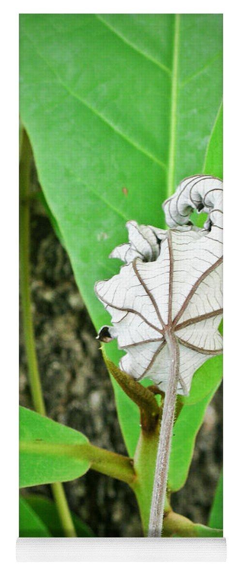 Plant Yoga Mat featuring the photograph Plant Artwork by Douglas Barnett