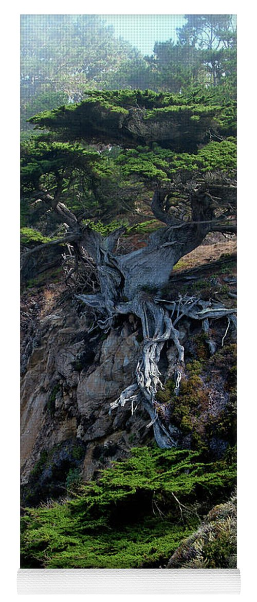 Landscape Yoga Mat featuring the photograph Point Lobos Veteran Cypress Tree by Charlene Mitchell