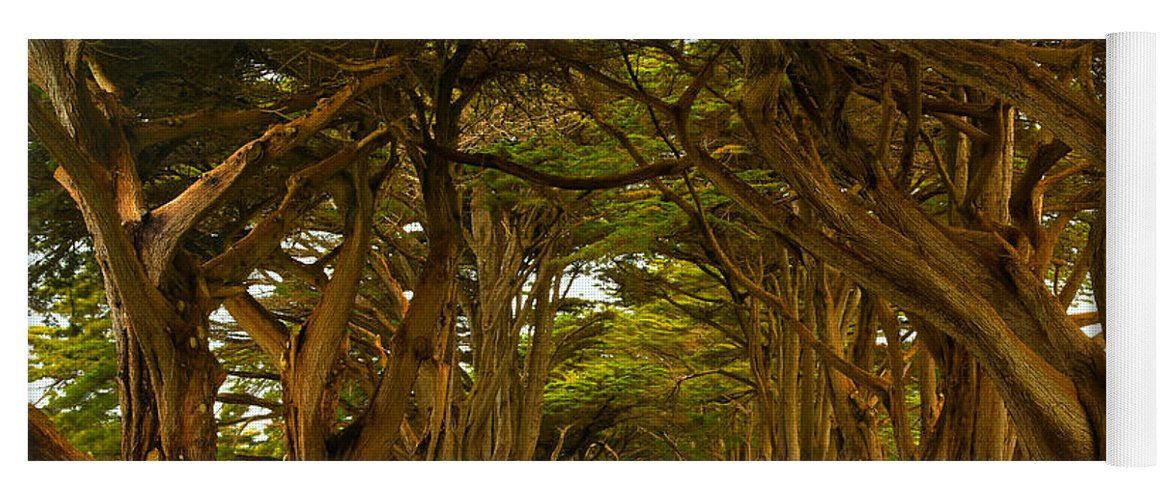 Cypress Tunnel Yoga Mat featuring the photograph Point Reyes Cypress Tunnel by Adam Jewell