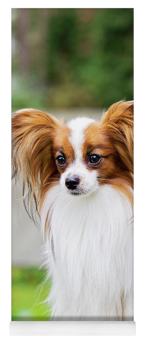 Portrait Of A Papillon Dog Yoga Mat For Sale By Anna Maloverjan