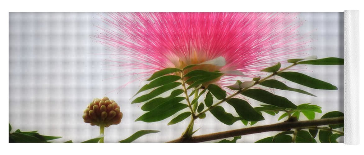 Puff Of Pink Mimosa Flower Yoga Mat For Sale By Mtbobbins Photography