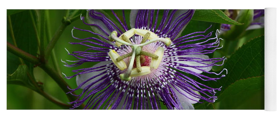 Passion Flower Yoga Mat featuring the photograph Purple Passion Flower by Barbara Bowen