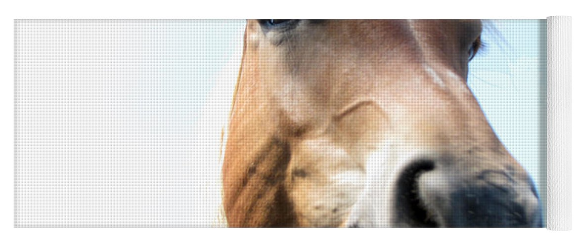 Horse Yoga Mat featuring the photograph Really by Amanda Barcon