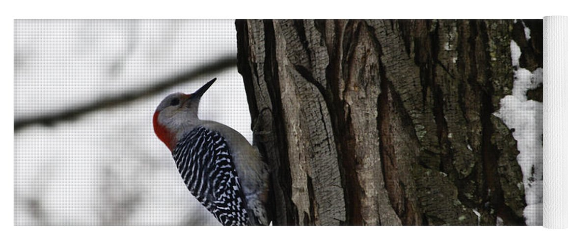 Woodpecker Yoga Mat featuring the photograph Red Bellied Woodpecker No 1 by Teresa Mucha