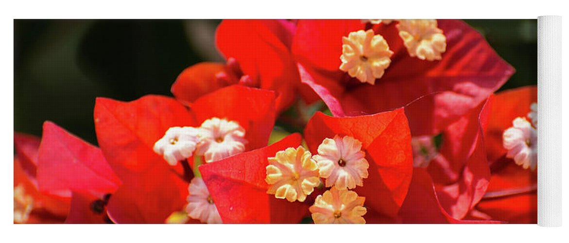 Bougainvillea Yoga Mat featuring the photograph Red Bougainvillea by Zina Stromberg
