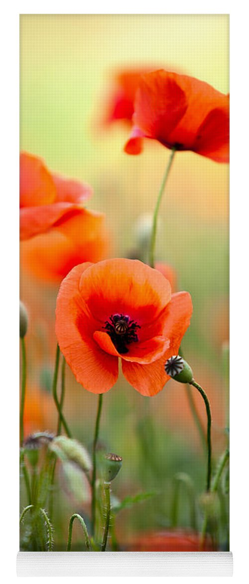 Poppy Yoga Mat featuring the photograph Red Corn Poppy Flowers 06 by Nailia Schwarz