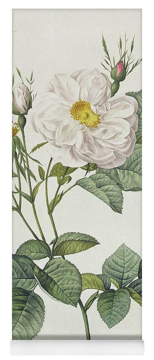 Rosa Yoga Mat featuring the drawing Rosa Alba Foliacea by Pierre Joseph Redoute