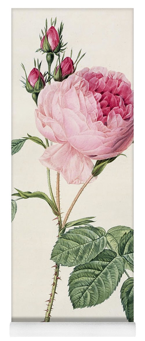 Rosa Yoga Mat featuring the drawing Rosa Centifolia by Pierre Joseph Redoute