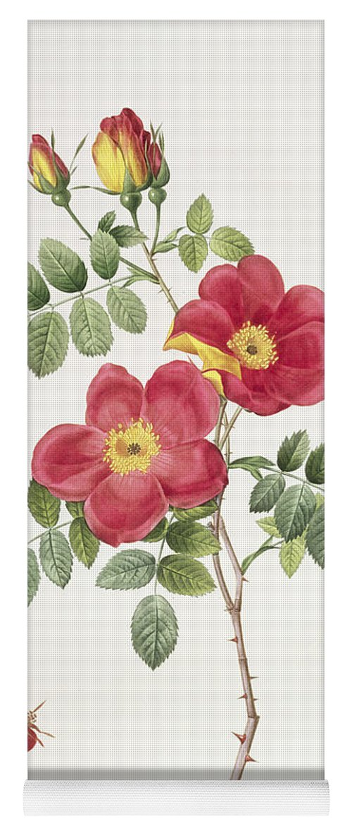 Rosa Yoga Mat featuring the drawing Rosa Eglantera Punicea by Pierre Joseph Redoute