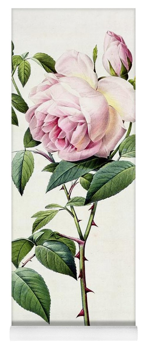 Rosa Yoga Mat featuring the drawing Rosa Indica Fragrans by Pierre Joseph Redoute