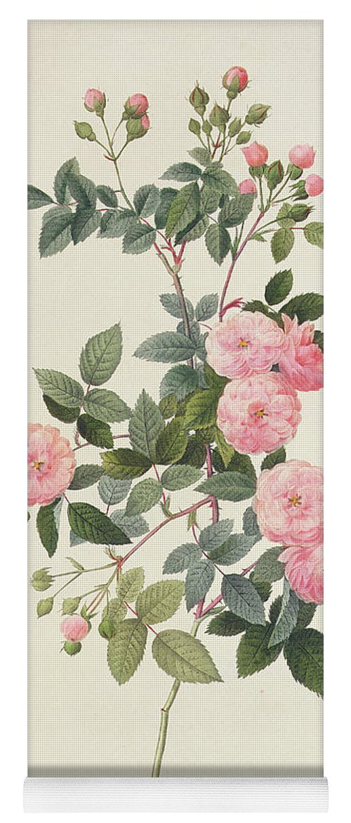 Rosa Yoga Mat featuring the drawing Rosa Multiflora Carnea by Pierre Joseph Redoute
