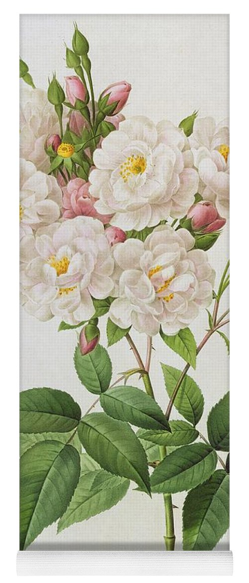 Rosa Yoga Mat featuring the painting Rosa Noisettiana by Pierre Joseph Redoute
