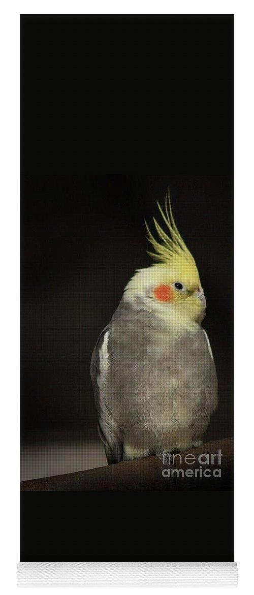 Bird Photographs Yoga Mat featuring the photograph Sassy by Kim Henderson